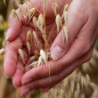 Farmer holding grain — Stock Photo