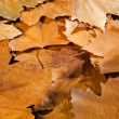 Autumn — Stock Photo #6907123