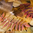 Autumn — Stock Photo #6907124