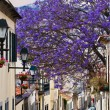Madeira Funchal — Stock Photo