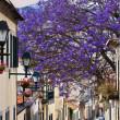 Madeira Funchal — Stock Photo #6968739