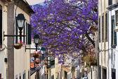 Madeira Funchal — Stock Photo