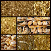 Bread and wheat — Stock Photo