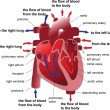 Human heart cross section. Poster — Imagen vectorial