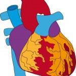 Heart 1 — Stock Vector