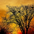 Landscape photo of trees in sunset in deep autumn — Stock Photo #7575603