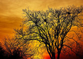 Landscape photo of trees in sunset in deep autumn — Stock Photo