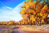 Landscape photo of foliage forest — Stock Photo