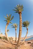 二十九棵棕榈树