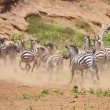 Herd of zebras (African Equids) and Blue Wildebeest (Connochaete — Foto de Stock   #6948558