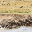 Herd of zebras (African Equids) and Blue Wildebeest (Connochaete — Foto de Stock   #6948613