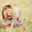 Stock Photo: Single male Lion (pantherleo) in savannah