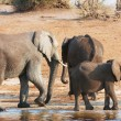 Stock Photo: Group of Large and small African elephants