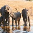 Large herd of African elephants — Stock Photo #6951484