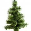 The Christmas tree ready to decorate isolated on white — Stock Photo