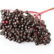 Elderberry, sambucus — Stock Photo