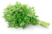 Green parsley leaves bunch — Stock Photo