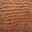 Crocodile leather background — Stock Photo
