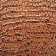 Crocodile leather background — Stock Photo #7563624