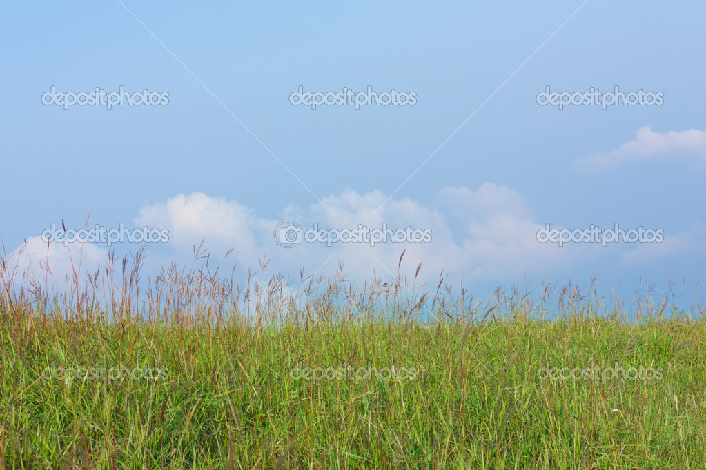 Green grass with blue sky — Stock Photo #6953057