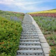 Stone stairway with flowers and blue sky — Stock Photo #7135511