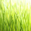 Bright green grass — Stock Photo #7690120