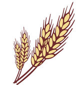 Wheat ear vector illustration — Stock Vector