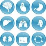 Blue ball icons anatomy — Stock Vector #6900837