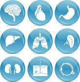 Niebieski piłka ikony anatomii — Wektor stockowy