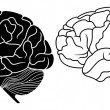 Stock Vector: Human brain