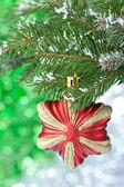 Julstjärna. — Stockfoto