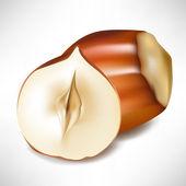 Hazelnuts shell and half — Stock Vector