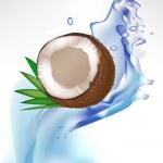 Broken coconut and leaves in splash of water — Stock Vector #7041358