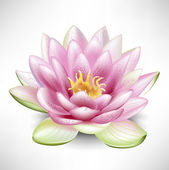 Single blossoming lotus flower — Stock Vector