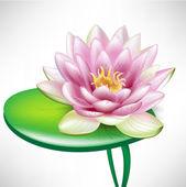 Single lotus flowers on leaf — Stock Vector