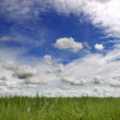 Field and sky — Stockfoto
