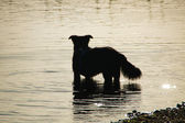 Waterdog - Wasserhund — Stock Photo