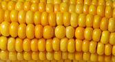 Corn - Mais — Stock Photo