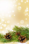 Christmas arrangement of fir branches and cones — Stock Photo