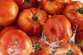 Composition with tomatoes — Stock Photo