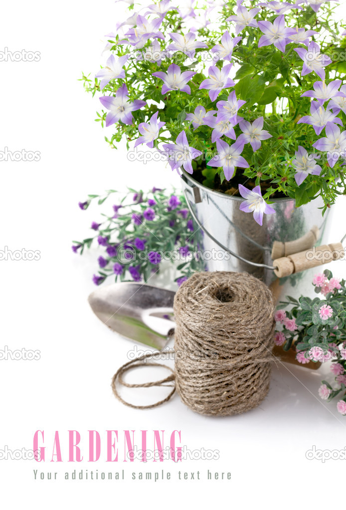 Garden equipment with violet flowers and green leaves isolated on white background — Stock Photo #10223305