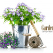 Stock Photo: Garden equipment with violet flowers and green leaves