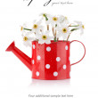 White spring flowers in red vase — Stock Photo