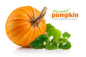Yellow pumpkin vegetable with green leaves — Stock Photo