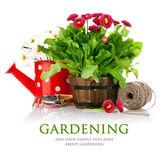 Fleurs de printemps avec outils de jardin — Photo