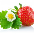 Strawberry berry with green leaf and flower — Stock Photo #11004148