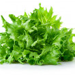 Green leaves lettuce - Stock Photo