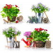 Stock Photo: Set garden flowers with tools