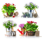 Set garden flowers with tools — Stock Photo