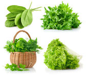 Set fresh leaves herbs — Stock Photo